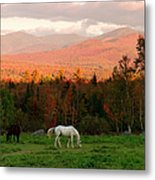 Horses Grazing During The New England Metal Print