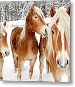 Horses In White Winter Landscape Metal Print