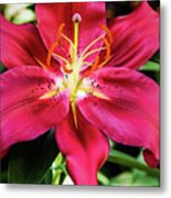 Hot Pink Day Lily Metal Print
