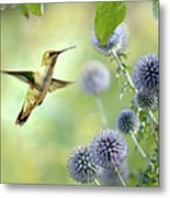 Hovering Hummingbird Metal Print
