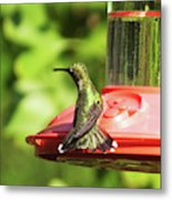 Hummingbird 106 Metal Print