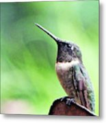 Hummingbird 90 Metal Print