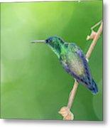 Hummingbird Abyss Metal Print