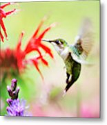 Hummingbird Fancy Metal Print