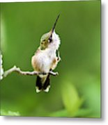 Hummingbird Flexibility Metal Print