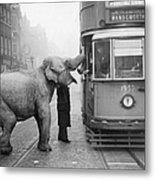 Hungry Elephant Metal Print