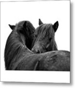 I Just Need A Hug. The Black Pony Bw Transparent Metal Print