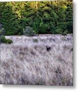 I Spy 4 Deer Metal Print