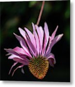 I Will Remember Summer Metal Print