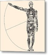 Ideal Human Proportion That Governs The Metal Print