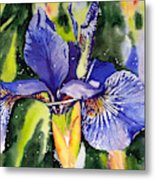 Iris In Bloom Metal Print