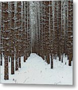 January Forest Metal Print