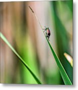 Japanese Beetle Climbs Plant Metal Print