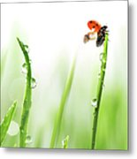 Ladybug On Green Grass Metal Print