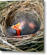 Life In The Nest Metal Print