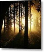 Light In The Woods Metal Print