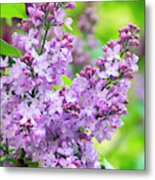 Lilac Flowers Metal Print
