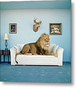 Lion Lying On Couch, Side View Metal Print
