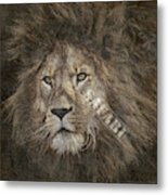 Lion Safari Metal Print