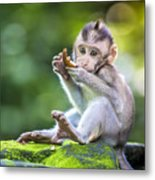 Little Baby-monkey In Monkey Forest Of Metal Print