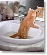 Little Kittens Bathing In The Sink Metal Print