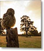 Little Owl Sunset Metal Print