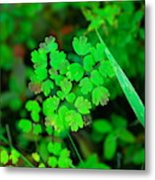 Little Patches Of Color  Metal Print