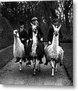 Llama Ride Metal Print