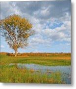 Lone Tree By A Wetland Metal Print