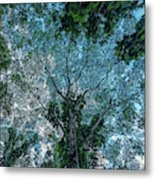 Looking Up Into The Canopy Of Trees Metal Print