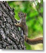 Lost Nuts Metal Print