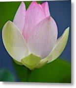 Lovely Soft Lotus Metal Print
