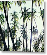 Low Angle View Of Coconut Palm Trees Metal Print