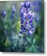 Lupine Blues Metal Print