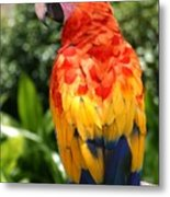 Macaw Sitting On A Branch Metal Print