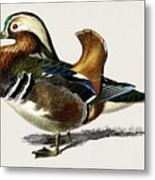 Mandarin Duck  Aix Galericulata Illustrated By Charles Dessalines D' Orbigny  1806-1876 1 Metal Print