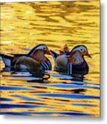 Mandarin Ducks Metal Print