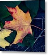 Maple And Ground Metal Print