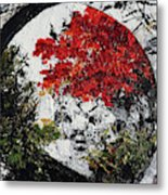 Maple Tree 2 201908 Bonsai Penjing Museum National Arboretum Metal Print