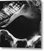 Marine Minimalism  Metal Print