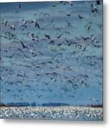 Migration Of The Snow Geese Metal Print