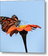 Monarch 2018-27 Metal Print