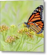 Monarch Butterfly - In The Light Metal Print