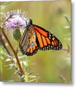 Monarch Butterfly On Thistle 2 Metal Print