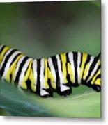 Monarch Caterpillar Macro Metal Print