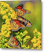Monarch Gathering 2 Metal Print