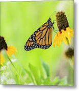 Monarch On Wildflowers Metal Print