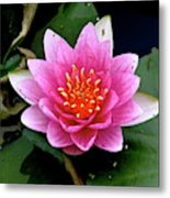 Monet Water Lilly Metal Print