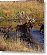Moose At Green Pond Metal Print