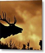 Moose At Sunrise Metal Print